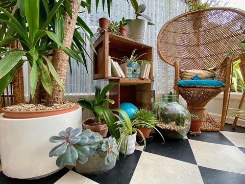How indoor plants can help your wellbeing & mental health